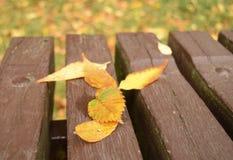 La hoja del otoño miente en un banco Foto de archivo