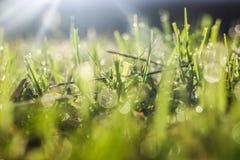 La hoja espectacular de la luz natural Foto de archivo libre de regalías