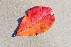 La hoja roja miente en las arenas finas foto de archivo libre de regalías