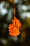 La hoja seca cuelga en un árbol Fotografía de archivo