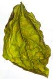 La hoja seca de una macro de la planta Foto de archivo