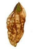 La hoja seca de una macro de la planta Foto de archivo libre de regalías