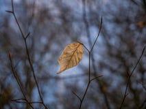 La hoja seca del otoño en un bosque Imagen de archivo libre de regalías