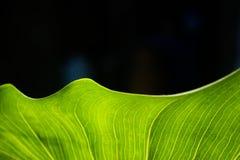 La hoja verde Imagen de archivo libre de regalías