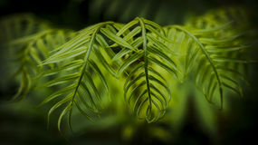 La hoja verde - belleza de la naturaleza Imágenes de archivo libres de regalías