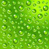 La hoja verde con agua cae el fondo del rocío Foto de archivo libre de regalías