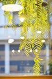 La hoja verde con la luz reflejó de la ventana del café Fotos de archivo libres de regalías