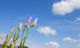 La hoja verde en el cielo azul Imagen de archivo libre de regalías