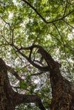 La hoja verde en el cielo azul Imagenes de archivo