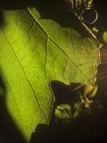 La hoja verde en la puesta del sol Imagen de archivo