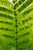 La hoja verde hace que muchos ramifiquen Foto de archivo
