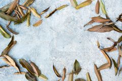 La hoja vieja falled sobre piso del cemento en el jardín en la estación del otoño Fotografía de archivo