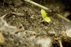 La hormiga en el primer de tierra Foto de archivo libre de regalías