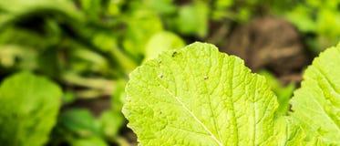 La hormiga en la hoja verde Fotos de archivo libres de regalías
