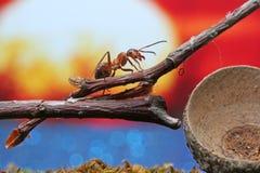 La hormiga se sienta en una rama seca imagen de archivo
