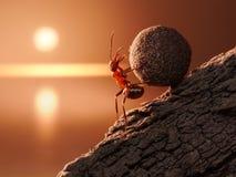 La hormiga Sisyphus rueda la piedra cuesta arriba en la montaña imagen de archivo