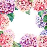 La hortensia floral herbaria rosada apacible blanda colorida maravillosa del otoño elegante brillante hermoso florece con el marc libre illustration