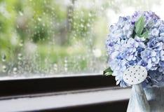 La hortensia florece en regadera del cinc en día lluvioso Fotografía de archivo