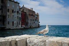 La huésped del mar fotos de archivo