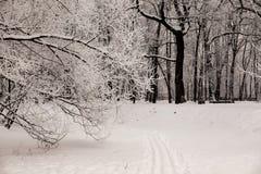 La huella de los esquís en la nieve en bosque del invierno en los días escarchados de la puesta del sol Árboles cubiertos en hela Imagenes de archivo