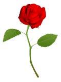 La ilustración de un rojo hermoso se levantó Foto de archivo