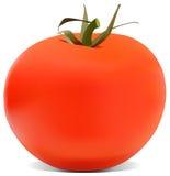 La ilustración del tomate Imágenes de archivo libres de regalías