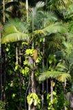 La imagen común del arco iris baja, Isalnd grande, Hawaii Imagenes de archivo