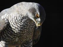 La imagen de este pájaro ha ganado el mundo imágenes de archivo libres de regalías