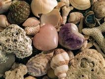 La imagen de fondo hermosa de cáscaras y el coral se centraron con dos imagen de archivo libre de regalías