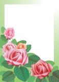 La imagen de la flor Imágenes de archivo libres de regalías