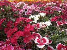 La imagen de las flores toma por m? con mi c?mara del tel?fono foto de archivo