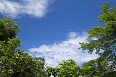 La imagen de un árbol con el cielo azul para el fondo Foto de archivo libre de regalías