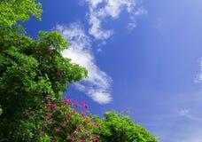 La imagen de un árbol con el cielo azul para el fondo Imagen de archivo