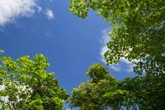 La imagen de un árbol con el cielo azul para el fondo Imagen de archivo libre de regalías