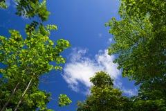 La imagen de un árbol con el cielo azul para el fondo Fotos de archivo libres de regalías