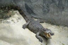 La imagen de un cocodrilo abrió la boca y ojos foto de archivo libre de regalías