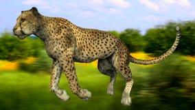 La imagen de un gepard Foto de archivo libre de regalías