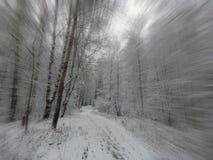 La imagen de una arboleda del abedul en efecto del enfoque del primer del invierno Foto de archivo