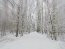 La imagen de una arboleda del abedul en efecto del enfoque del primer del invierno Fotografía de archivo