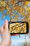 La imagen del amarillo se va en abedul en otoño Foto de archivo