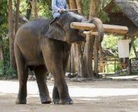 La imagen del los elefantes levanta para arriba la madera imagenes de archivo