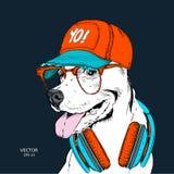 La imagen del perro en los vidrios, auriculares y en sombrero del hip-hop Ilustración del vector Fotos de archivo