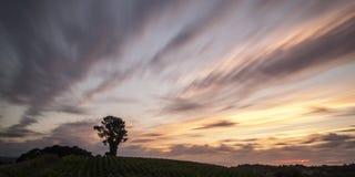 Árbol en el campo Fotos de archivo libres de regalías