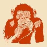 La imagen gráfica de un mono Vector EPS 10 Foto de archivo libre de regalías