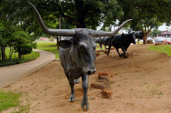 La impulsión del ganado de Waco Fotos de archivo