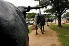 La impulsión del ganado de Waco Foto de archivo