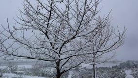 La inclinación abajo tiró del árbol plano cubierto en nieve en invierno en la tarde Cámara lenta metrajes