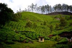 La India archivada té imagen de archivo libre de regalías