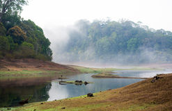 La India Kumily, Kerala, la India - fauna San de Periyar del parque nacional Imagenes de archivo