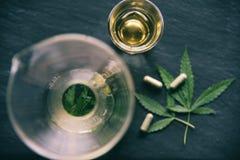 La infusión de hierbas y la cápsula del cáñamo de la planta de la hoja de la marijuana en fondo/cáñamo oscuros se va para la aten fotos de archivo